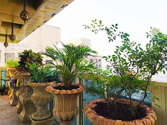 Lavish Opulent Homes for Sale Andheri West