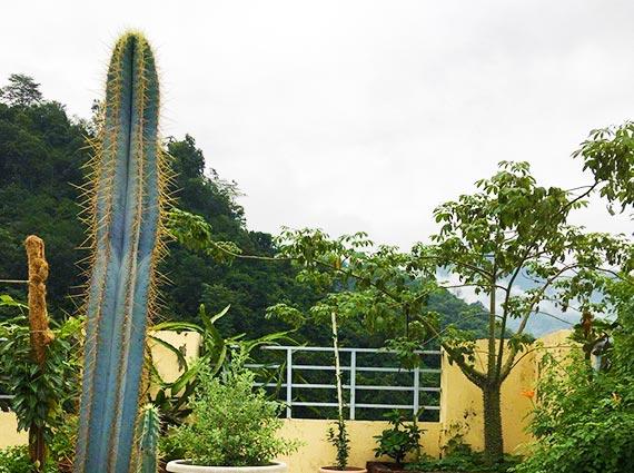 Natural Homes Rishikesh
